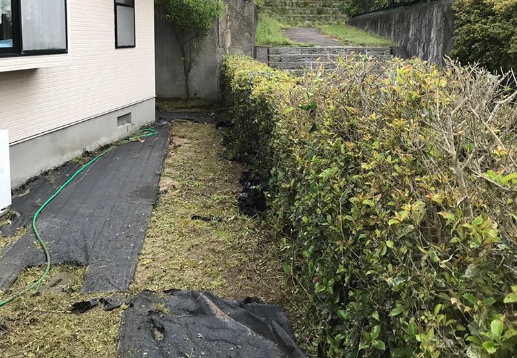 伸び放題のヒイラギの垣根と雑草がきれいになりました